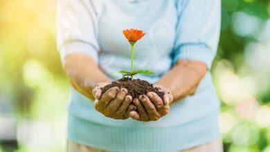 Photo of Le jardinage, un passe-temps idéal !