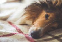 Photo of Désinfectants pour vos animaux de compagnie : attention danger !
