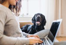 cancers-poumons-depistage-chiens