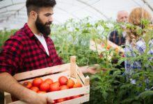 agriculture-locale-bon-sante-mentale