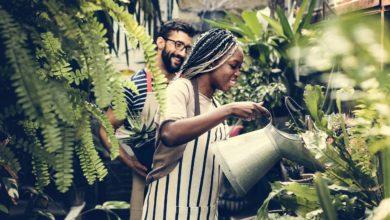 5 plantes médicinales à avoir dans son jardin