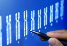 """""""Bébés OGM"""": l'OMS lance un registre mondial des recherches"""