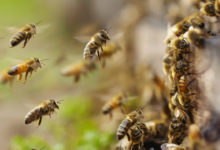 Photo de 5 gestes bee-friendly à adopter au quotidien
